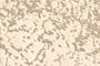 Диван-кровать  Виктория-5, 800 обивка ткань Tina 04